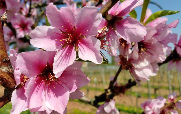 Lust auf Frühling – die Natur erwacht aus ihrem Schönheitsschlaf
